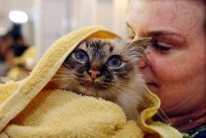 – Att katter egentligen inte tycker om vatten har inte gått upp för Greta. Hon krafsar på dörren till badrummet varje morgon för att matte ska komma ihåg hennes morgondusch.