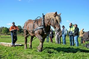 Under fjolårets Vibydag var bland andra Jimmy Andersson med och visade skogskörning med häst.Arkivfoto: Jan Wijk