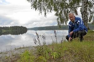 Mycket orkidéer. Det är ovanligt mycket orkidéer i år, berättar Lennart Haraldsson. Här är en purpurknipprot längs vägen strax norr om Uskavi.