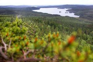 Uppe på Ärtknubben i Bjursås möts man av en av Falu kommuns vackraste utsiktsplatser, med stora vyer utöver ståtliga berg, milsvida skogar. glittrande vatten. Som högst kan du komma 450 meter över havet, men eftersom