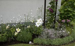 Stora och små blommor mot husväggen.