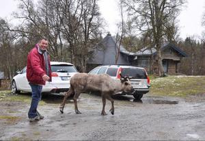 En engelsman i Lionssällskapet blev helt fascinerad och glömde gruppen när han träffade renen på Daniel Perssons gård.