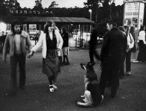 Folkparksliv: ungdomar och bevakande polis(hund).