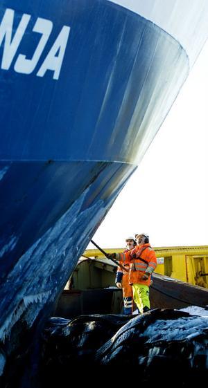 Tanja kopplas ihop med isbrytaren Balder Viking för att kunna ta sig in till Orrskärshamnen för att lasta trävaror.