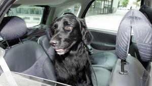 Kan bli livsfarlig. Är olyckan framme blir en hund som sitter lös i baksätet livsfarlig - både för sig själv och människorna i bilen.
