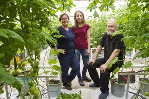 Lea och Uno Hörnström på Tomat Ås har fått sällskap av Nathalie Nygren i växthuset.