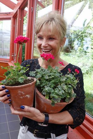 Med famnen full av sig själv. Pelargonkännaren Brian West skapade pelargonen Lotta Lundberg till just Lotta Lundberg. I dag finns den att köpa i många plantmarknader.
