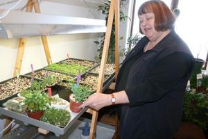 Elisabeth Söderberg visar grönsaker som man redan nu kan börja odla i krukor inomhus.