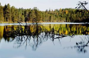 Berge urskog delas av den långsmala Gråsjön.
