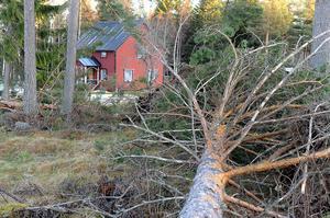 Längs vägar låg hundratals träd med rötterna i vädret.