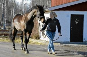 På gården Lilla Rom mellan Hallsbergs kyrka och Skogaholm har Ebba sina hästar. Här är hon på promenad med sexåringen Wille. När hon själv vill rida i ridhus beger hon sig till Hagaby utanför Kumla, där hon träffar många ryttare från Hallsberg. Bild: JAN WIJK