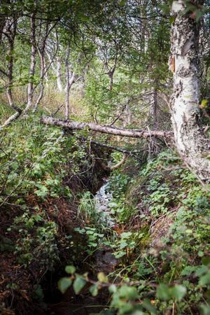 I slutet av 1800- och början av 1900-talen grävde människor upp diken på Ånnsjöns myrmarker. I dag ska de läggas igen för att förhindra att myrarna torkar ut.