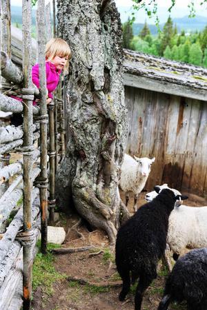 Inez Pertmann var förtjust i alla fåren.