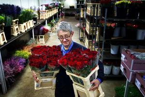Blommornas herre. Arne Johansson och medarbetarna på Målsta Blommor har bråda dagar, både i Målsta och i grossistlokalerna i Nacksta. Stora fång av Passion-rosor från Holland passar bra en sådan här dag, tycker han.