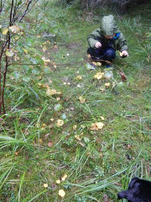 Edvin 3,5 år har hittat svamp som han gärna äter på smörgåsen :)