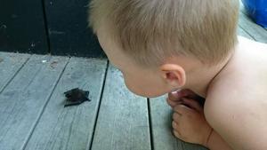 Neos möte med en liten fladdermusbebis. Foto Robert Jugen