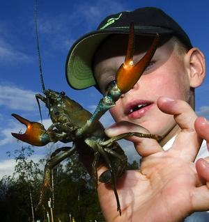 Nyps inte. – Håller man så här slipper man bli nypt av kräftan, förklarar sexåriga Mattias Renström. Foto:Mikael Forslund