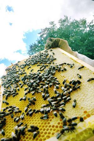 I vaxkakans celler lägger drottningen sina ägg. Det är också där som arbetsbina placerar honungen.