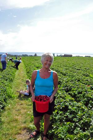 Laila Jämtgård från Frösön skulle baka jordgubbstårta till sitt barnbarn som fyller år med jordgubbarna hon plockade.