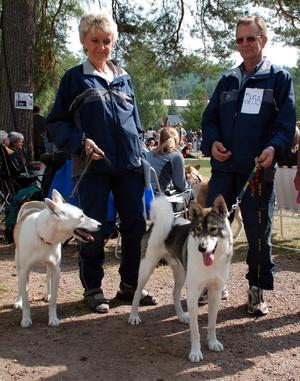 Trotjänare. Ulla-Britt och Bengt Byström har besökt älghundutställningen i Rättvik sedan 1970. Med sig i år hade de Västsibiriska laikorna Lina och Astok.