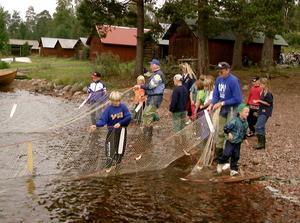 Notdragning. 1981 till 1998 hölls SM i notdragning i Nusnäs. Därefter sinade bliktan, men nu ser den lilla siklöjasstammen ut att växa till sig i Siljan. Foto: BERIT OLARS/Arkiv
