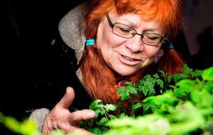 """Växterna till den egna köksträdgården förgror Helena Andrén Niemi på gamla höskullen till den ladugård som finns på tomten i Västervåla utanför  Ängelsberg. Nu i maj håller hon två kurser där i """"Kom och koka"""", hur man bland annat gör grötomslag, tinkturer och salvor."""