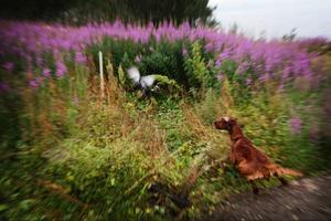 Jaktkurs 21 augusti 2012 i Stora Blåsjön inför den då stundande jakten på ripa och annat småvilt.
