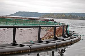 Det ställs hårda krav på sanering när en fiskodling drabbas av smittsamma sjukdomar.
