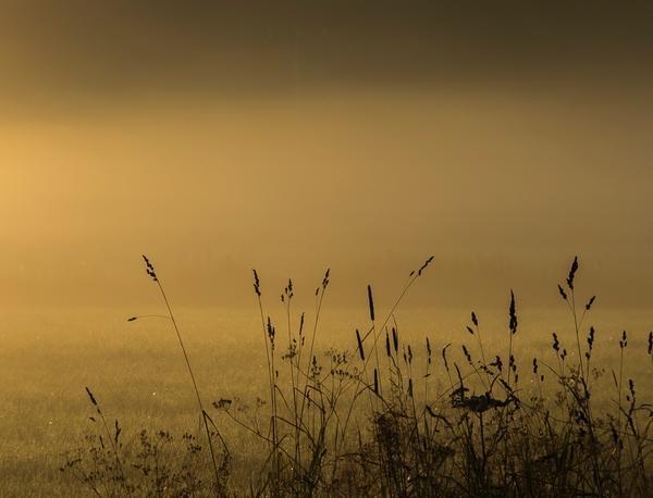 En lugn och disig tidig morgon vid ett fält i Norberg