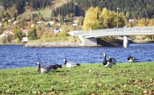 Vy från Badhusparken mot Frösön.