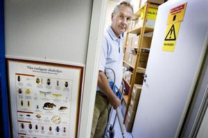 SNABB SPRIDNING. Anticimex vd  Rolf Wickenberg i Gävle vittnar om bostäder som är invaderade av kackerlackor när skadedjursbekämparna kommer. Insekterna har hunnit sprida sig via rörstammar till de andra lägenheterna i stora flerfamiljshus.