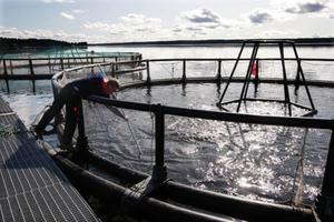 Fiskodling i Landösjön.