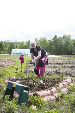 Lena Nylund ser många fina grejer med Tillsammansodlingen, bland annat att få jobba med växter, umgås med likasinnade och att göra gott för miljön.