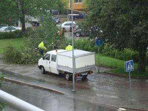 Foton ifrån min balkong på Hillmanskroken 11, Brynäs Träd knäckt över gång/cykelbana. Mvh/Ulla Forsenberg