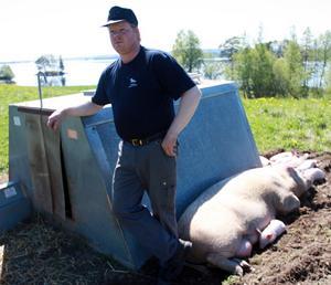 – Grisarna har det varmt och gott i hyddorna, säger Magnus Gustaphsson.