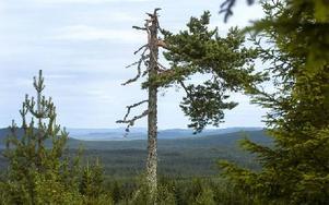 Mil efter mil med skogsklädda berg och kullar syns från Spjärshällen. Foto: Mikael Forslund