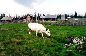 Fäbodbruket måste hållas ihop över svenska länsgränser och inför EU:s teknokrater. Allt annat ter sig orimligt.