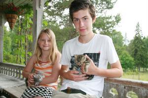 Malva Tärnström och Jonatan Montelius, båda från Stockholm, kelade med kattungarna. Familjen har sommarstuga vid Grängen. De hann även äta våfflor.