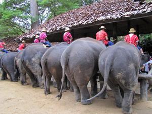 En bakvänd bild från Thailand.