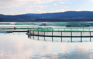Vattudalens fisk, Svensk fjällröding vill utöka sina verksamheter, Bright water fish Sweden vill starta sin verksamhet. Men de har alla snart väntat i två år på att få ett besked från miljöprövningsdelegationen, precis som Wangensten fisk AB som nyligen efter två år äntligen fick ett beslut.