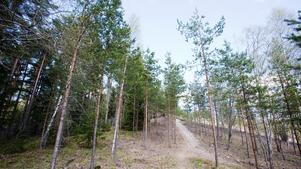 Skogen mellan Rapphönsvägen och Tjusarstigen betecknas som parkmark. Här på höjden vill ett företag nu bygga en 36 meter hög mobilmast.