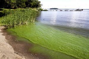 Grönt inte alltid skönt. Tillväxten av grönalger, som ger ett tjockt grönt vatten, indikerar att situationen inte är bra, skriver Karl-Erik Andersson.