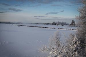 Renhjorden syntes på långt håll och låg som ett sträck längst med Hammerdalssjöns is.