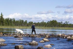 Som ett otätt stenparti ser den nygjorda forsnacken vid Lostersjöns utlopp ut. Bosse Öhman och hunden Ixa inspekterar.