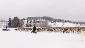 För några veckor sedan flyttade Jijnjevaerie sameby sina renar till Östjämtland. Här, öster om Sörviksjön kommer Bodhögarna vindpark att stå i framtiden enligt Statkrafts och SCA:s byggplaner.