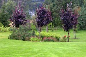 Trädgårdens gräsmatta innehåller öar med högre vegetation.