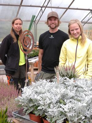 Silver-ek och ljung är klassiska växter att pynta med under hösten. Från vänster:Sara Backlund, Per Danielsson och Caroline Eriksson på Mora Trädgård.