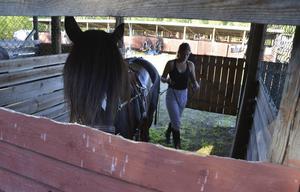 Caroline Melin  från Sundsvall pysslar om en av sina hästar.