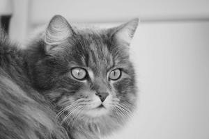 31) Finns ingen snällare än min kattprins Tusse! Foto: Jennifer