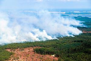 Totalt förstördes cirka 150 kvadratkilometer skog i branden. Foto: Anders Hedlund